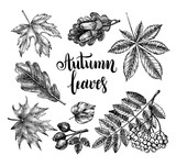 Ink hand drawn set of autumn leaves, rowan berries, acorns. Autumn elements collection with brush calligraphy style lettering. Vector illustration. - 218669009