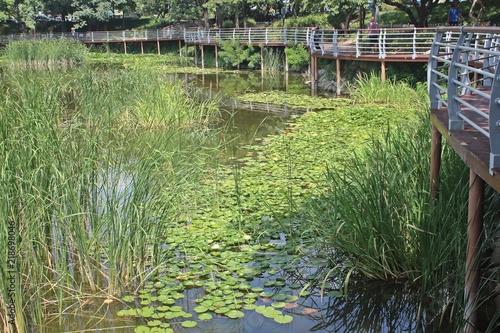 Aluminium Olijf 연못