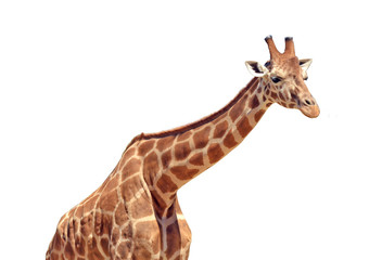 Giraffe isolated on white background © Rafael Ben-Ari