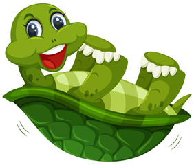A cute turtle on whitw background