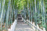 bamboo forest and stone steps
