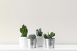 Modern room decoration. Various cactus house plants in different pots against white wall. Cactus mania concept with copy space.