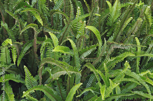 Background with ferns