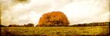 vintage filtered landscape, group of tree on a field - 218757202