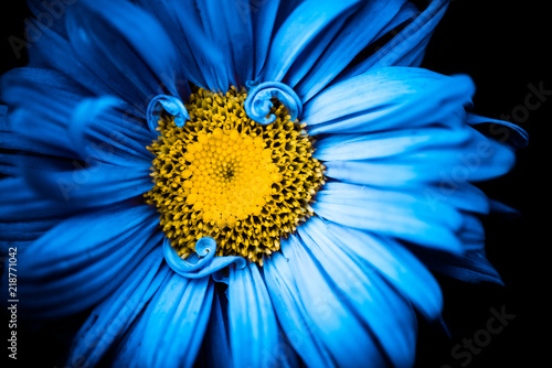 Beautiful blue summertime flower with yellow center buy photos beautiful blue summertime flower with yellow center mightylinksfo