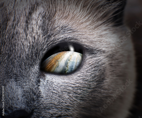 Mysterious cat eye with purple galaxy inside. - 218792899