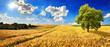 Leinwandbild Motiv Goldenes weites Feld an einem schönen Tag