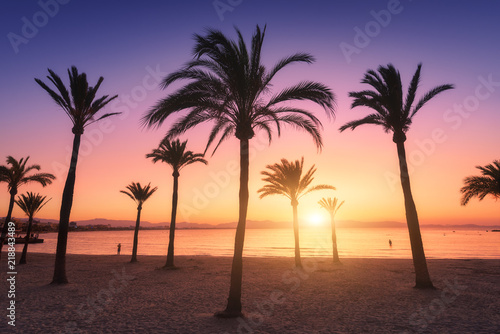 Silhouettes of palm trees against colorful sky at sunset. Tropical landscape with palms on the sandy beach, sea, gold sunlight in the evening in summer in Mallorca, Spain. Vintage style. Nature