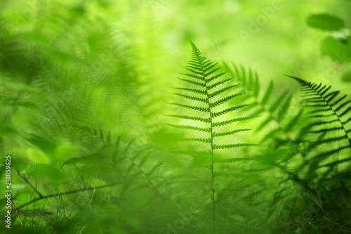 Forest green fern plants in morning sunlight.