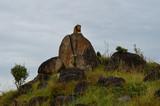Männlicher Löwe auf Felsen mit direktem Blickkontakt 1; Kidepo Valley National Park, Uganda - 218862288