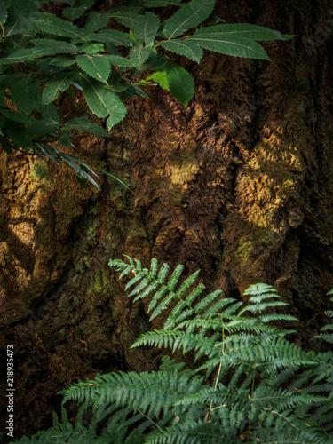 new forest hampshire uk