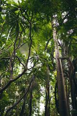 palm trees © Philipp