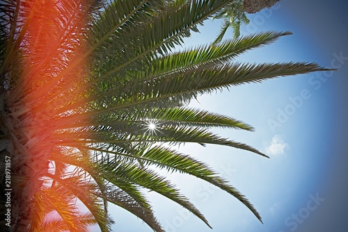 sun and palm background