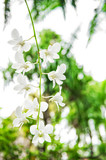 White orchid flower green tropical plants