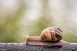 Snail in rainy morning