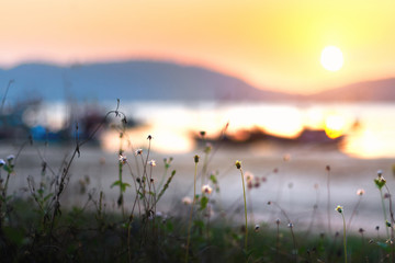 Beautiful sunset over the beach with grass. Beautiful natural landscape in the summer time. Abstract Nature Background. color filter and soft focus