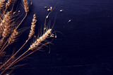 Ears of wheat and grains - 219017081