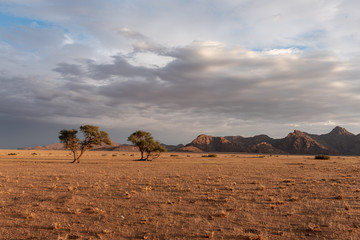 Soft morning sunlight touchingthe golden grass with trees and mountains in the distant after thunderstorm in the desert, Namibia © Claude