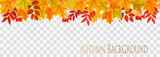 Abstract autumn panorama with colorful leaves on transparent background Vector - 219049492