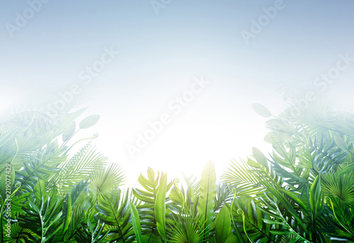 Summer tropical leaves for banner and background, different leaf, rainforest plant. copy space and blank text.