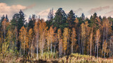 Bright sunset in the autumn forest, sun glare, a change of seasons, a beautiful landscape - 219088255