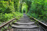 old railway in green forest - 219092480