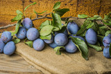 fresh plums on a branch - close up - 219113494
