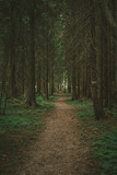 Pathway in the woods