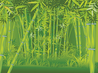 Bamboo forest scene © AnnaPa