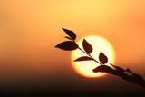 tree twig on sunset background - 219144472