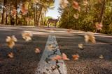 Reh steht auf der Straße mit wehenden Blättern im Herbst