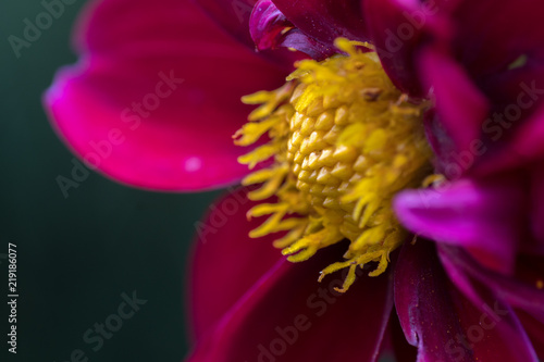 purple flowers detail - 219186077