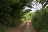 Estrada rural em Guarani, estado de Minas Gerais, Brasil - 219187423
