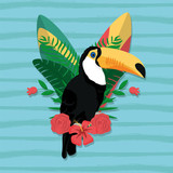 Tucan exotic bird - 219189404