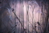 Abstract blurry soft pink colored grass meadow. Selective focus used. - 219197280