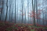 Autumn season foggy forest tree landscape background. - 219197452