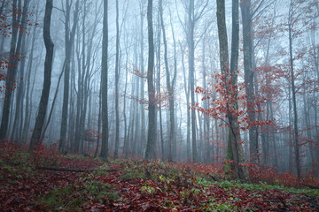Autumn season foggy forest tree landscape background. © robsonphoto