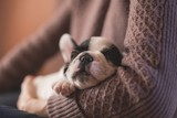 Cute puppy sleeping on the couch