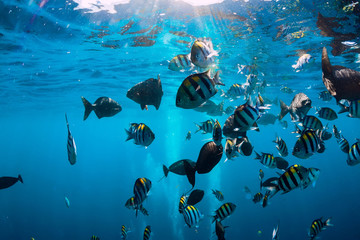 Underwater world with tropical fish in Pacific ocean