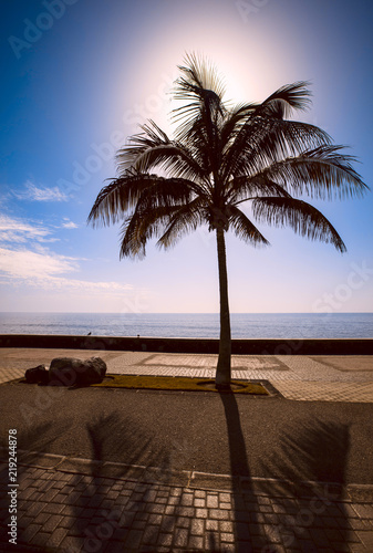 Palm silhouette and strong back-light in Spain. In the background is blue sky and sea. In the foreground an empty pedestrian street. Image includes a effect.
