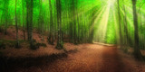 panorama of beech forest in spring with sun rays