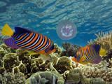 Underwater blue background in sea - 219280423