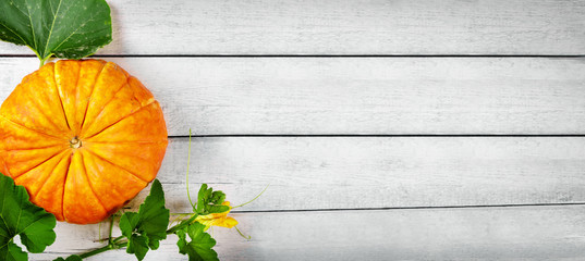 pumpkin on white wooden plank background. top view copy space