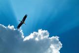 Cicogna in volo, Carignano, Torino, Piemonte