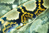 Yellow, brown, and black snake texture - 219284863