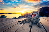 Stray tiger cat on the pier in the lagoon yawning at sunset