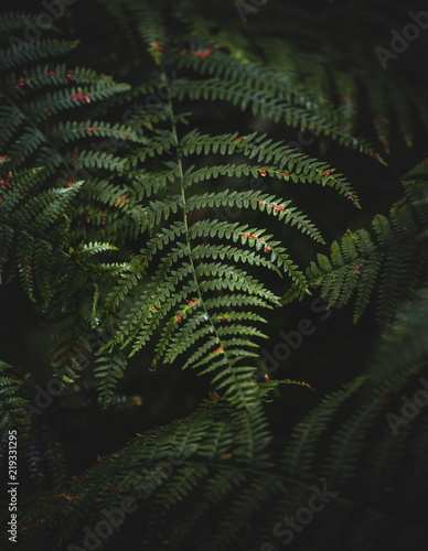 Sunlight on a fern leaf