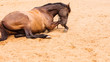 Brown wild horse lying on sand