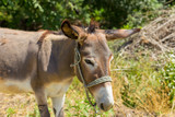 donkey on the field
