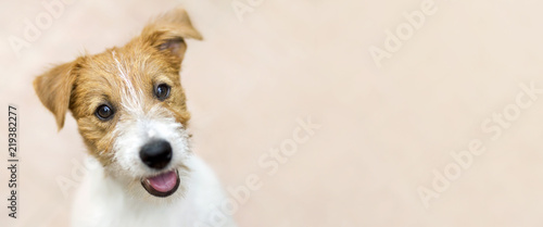 Happy smiling jack russell terrier dog pet puppy - web banner with copy space © Reddogs